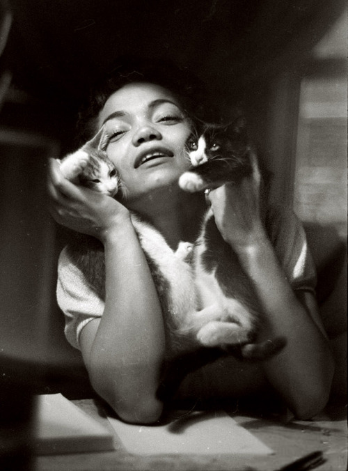 eartha kitt with kittens